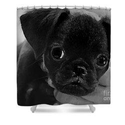 Shower Curtain featuring the mixed media  Brussel Griffon Puppy Painting by Marvin Blaine