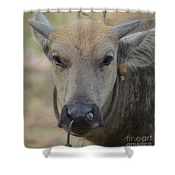Buffalo Shower Curtain by Michelle Meenawong