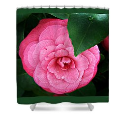Shower Curtain featuring the photograph  Camellia Japonica ' Elizabeth Weaver ' by William Tanneberger