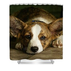Shower Curtain featuring the mixed media  Cardigan Welsh Corgi  by Marvin Blaine