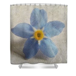 Myosotis 'forget-me-not'- Single Flower Shower Curtain
