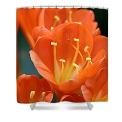 Clivia Shower Curtain by Karen Silvestri