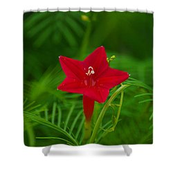 Shower Curtain featuring the photograph  Cypressvine Morning Glory by Blair Wainman