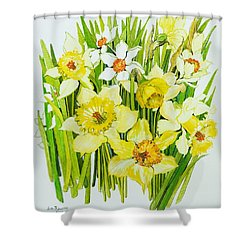Daffodils And Narcissus Shower Curtain by Joan Thewsey