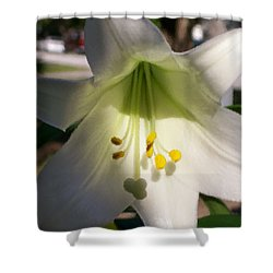 Easter Peace Shower Curtain by Belinda Lee