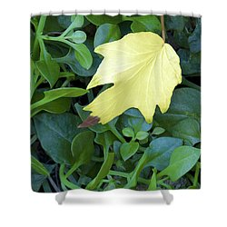 Fallen Yellow Leaf Shower Curtain
