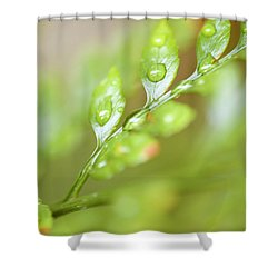 Fern Fronds Shower Curtain