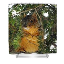 Fox Squirrel Shower Curtain