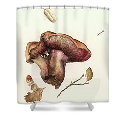 Fungus Shower Curtain by Alison Cooper