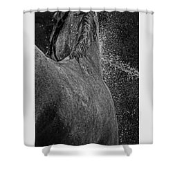 Horse Cool Off Shower Curtain