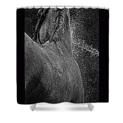 Horse Cool Off Shower Curtain by Phil Cardamone