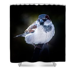House Sparrow  Shower Curtain