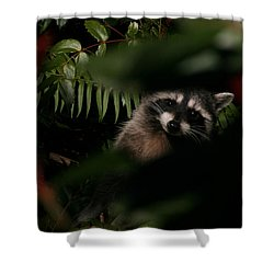 Shower Curtain featuring the photograph  I Can See You  Mr. Raccoon by Kym Backland
