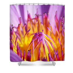 Just Purple Shower Curtain