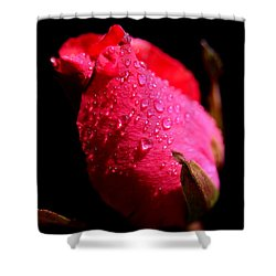 La Rose Shower Curtain by Michelle Meenawong