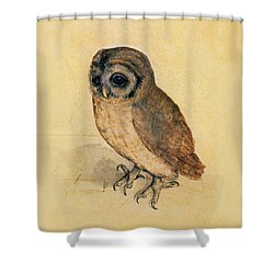 Little Owl Shower Curtain by Albrecht Durer