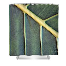 Nervures Shower Curtain by Michelle Meenawong