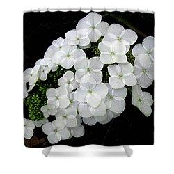 Oak Leaf Hydrangea Shower Curtain
