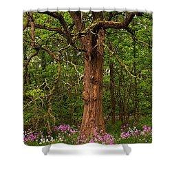 Oak Tree And Dame's Rocket Shower Curtain by Randy Pollard