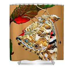 Painted Lady Butterfly Shower Curtain by David and Carol Kelly