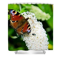 Peacock Butterfly Shower Curtain by Martina Fagan