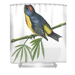 Philippine Flowerpecker Shower Curtain by Anonymous