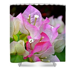 Pink  Bougainvillea ...with A Friend Shower Curtain by Lehua Pekelo-Stearns