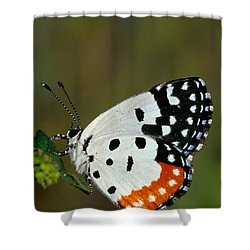 Red Pierrot Butterfly Shower Curtain by Anonymous