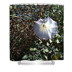 Shower Curtain featuring the photograph  Sacred Datura by Angela J Wright
