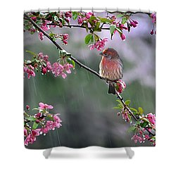 Singing In The Rain  2   Shower Curtain