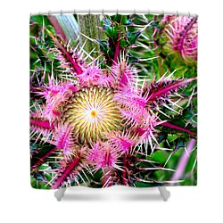 Texas Thistles Shower Curtain by Antonia Citrino
