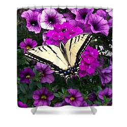 Tiger  Swallowtail Butterfly Shower Curtain