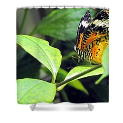 Tiger Wings Shower Curtain