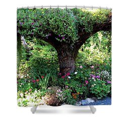 Shower Curtain featuring the photograph  Upside Down Tree by Jennifer Wheatley Wolf