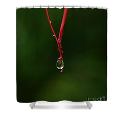 Waterdrop Shower Curtain by Michelle Meenawong
