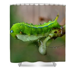 Wet Caterpillar Shower Curtain by Michelle Meenawong