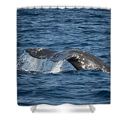 Whale Fluke In Dana Point Shower Curtain by Loriannah Hespe
