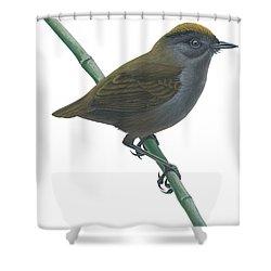 Wrenthrush Shower Curtain