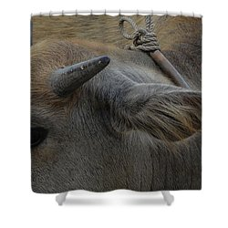 Young Buffalo Shower Curtain by Michelle Meenawong