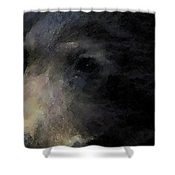 01042014 Black Bear Alaska Shower Curtain