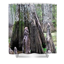 02102015 Honey Island Swamp Shower Curtain