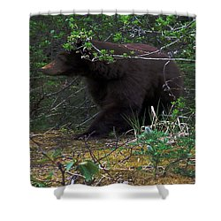 03162015 Black Bear Alaska Shower Curtain