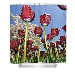 Shower Curtain featuring the photograph 090416p029 by Arterra Picture Library