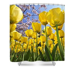 090416p030 Shower Curtain