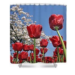 090416p031 Shower Curtain