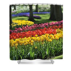 Shower Curtain featuring the photograph 090811p123 by Arterra Picture Library
