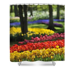Shower Curtain featuring the photograph 090811p124 by Arterra Picture Library