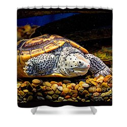 Sea Turtle Shower Curtain by Savannah Gibbs