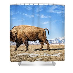 A Bison In The 24,700-acre National Elk Shower Curtain