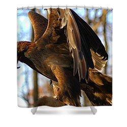 A Golden Eagle Shower Curtain by Raymond Salani III